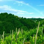 zagorje_vineyard_rainbow